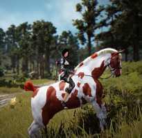 Black Desert: навыки лошадей